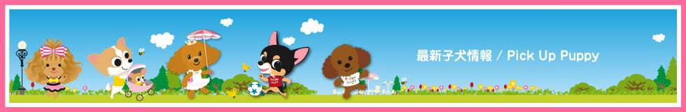 Recommend Puppy / オススメの子犬情報